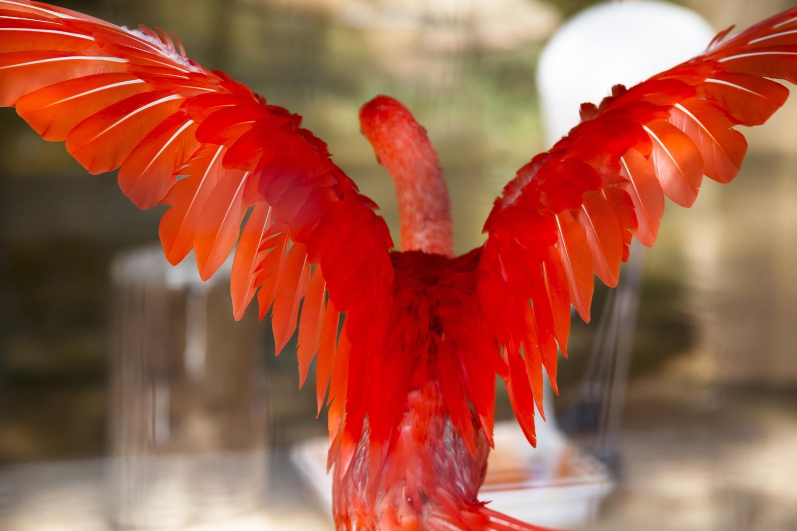 """""""Alltså, det är 2019 och man kan vara en flamingo om man vill, vem bryr sig"""" - Dag 88 av 365"""